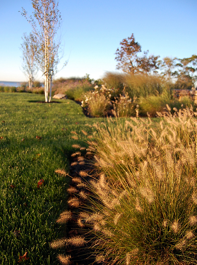 The LaurelRock Company - Residential Landscaping in CT - Bluff Point - Ornamental Grasses