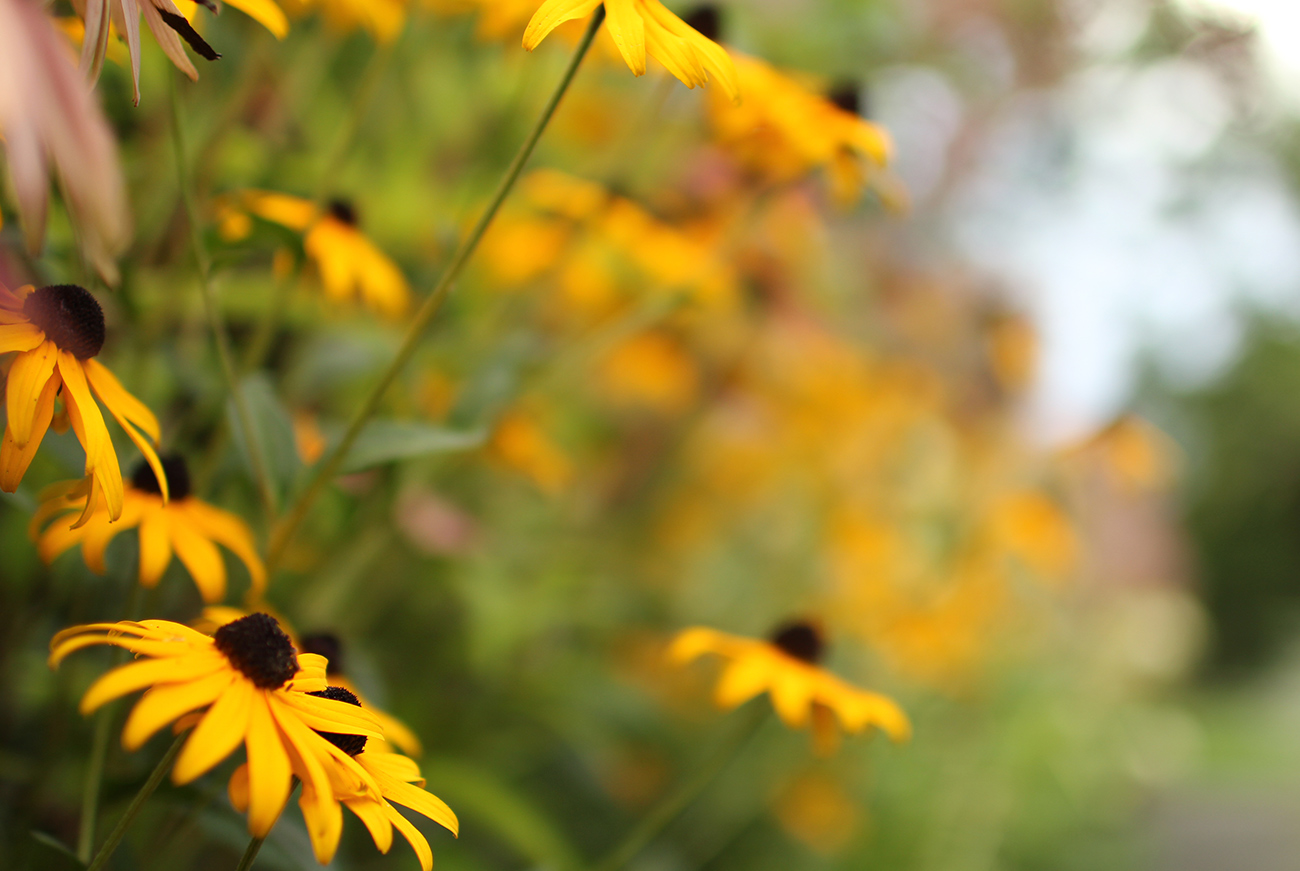 The LaurelRock Company - Residential Landscaping in Wilton CT - High Meadow Farm - Flower Detail