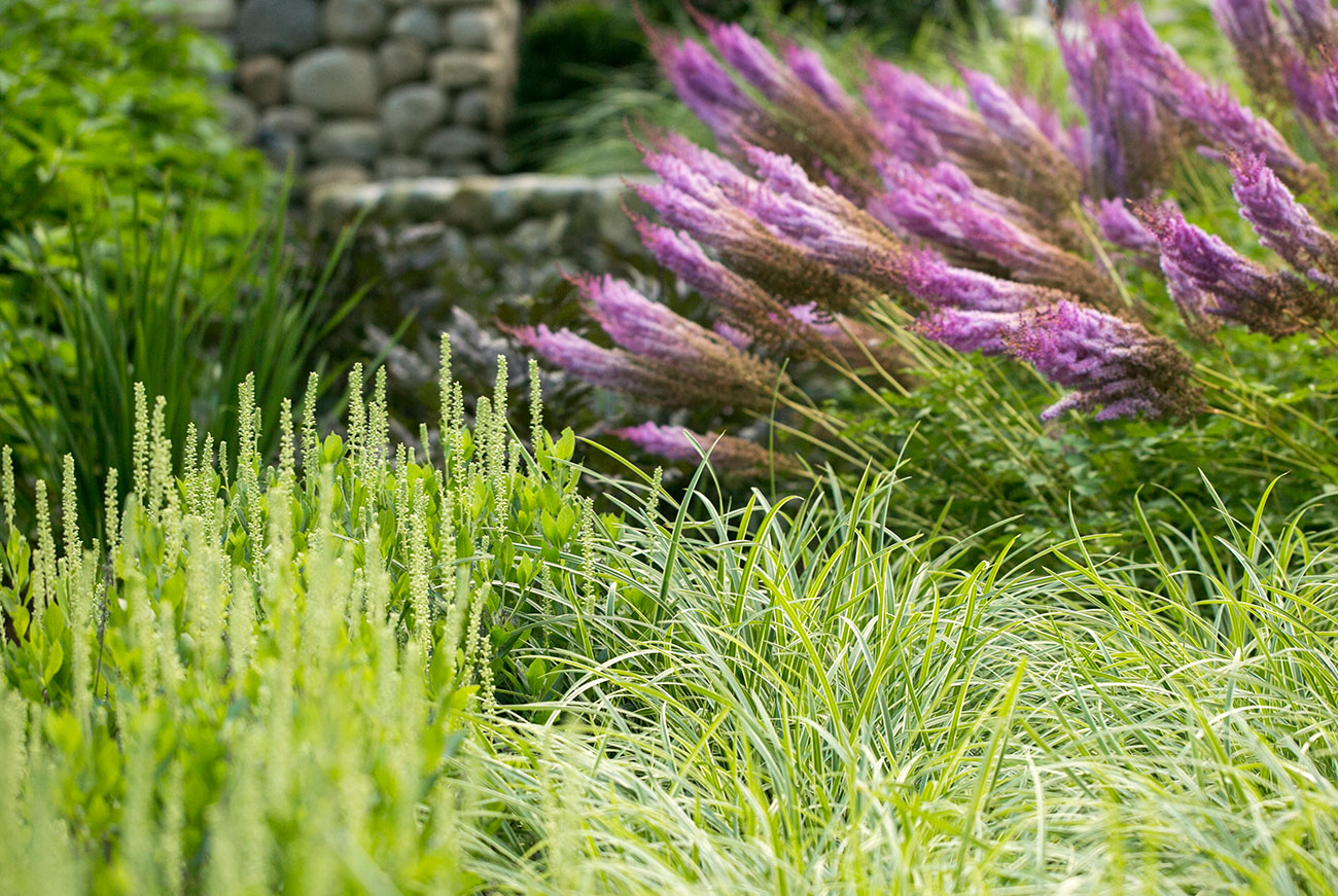 The LaurelRock Company - Residential Landscaping in CT - Hollow Tree Ridge - Plant Detail