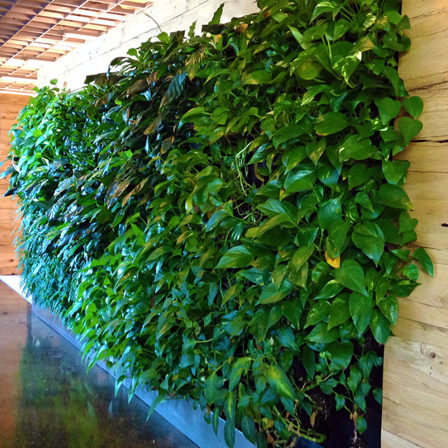 The LaurelRock Company provides sustainable offerings including living walls.