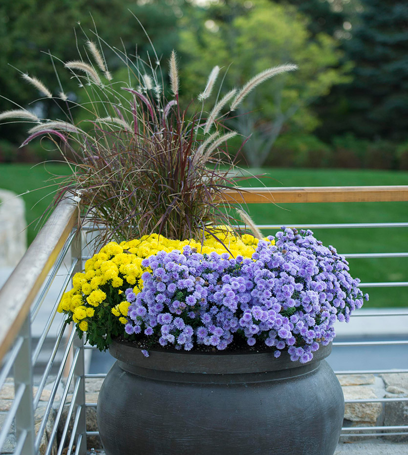 blue flowers Professional Landscaping in Fairfield country, CT